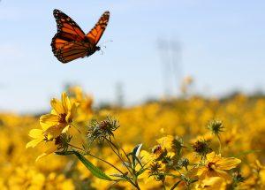 butterfly beth
